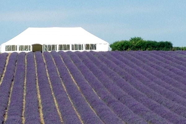 Wedding marquee in field of lavender at Lordington | Lewis Marquees